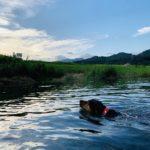 綾町で犬と川遊びするなら夕方の松原公園がおすすめ